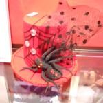 capellino ragno